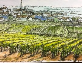 A classic Burgundy vineyard