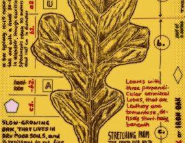 post oak – detailed