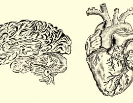 brain and heart, anatomical