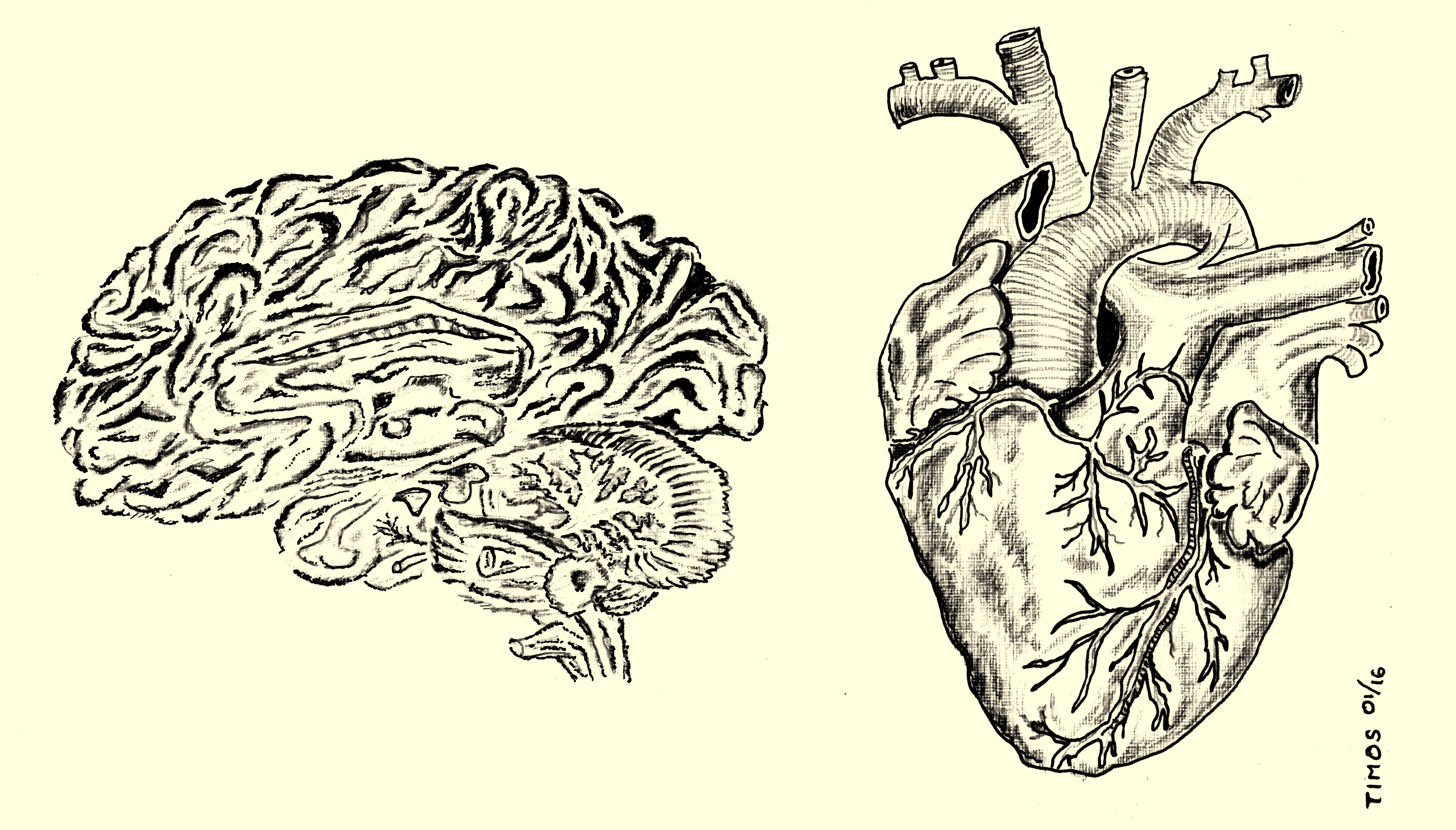 brain and heart, anatomical