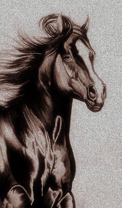 horse unbound