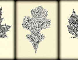 Fall leaves triptych