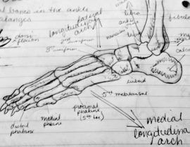Anatomy  notes