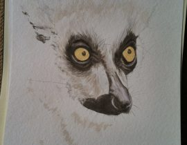 Portrait of a Ringtail lemur