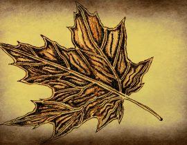 silver maple, full leaf