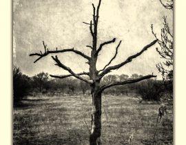 standing dry