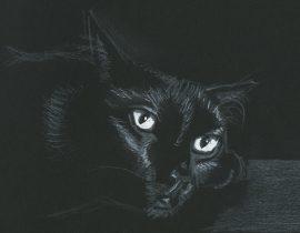 Black Cat 3