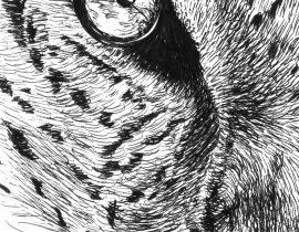 Tiger – Moleskine 01