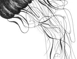 Jellyfish – Moleskine 01