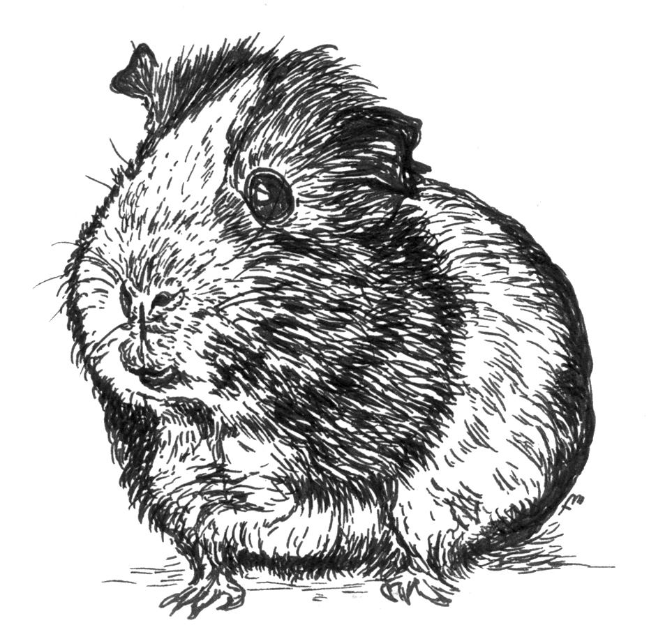 Hamster  – Moleskine 01