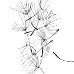 Dandelion – Moleskine 01