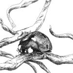Ladybug – Moleskine 01