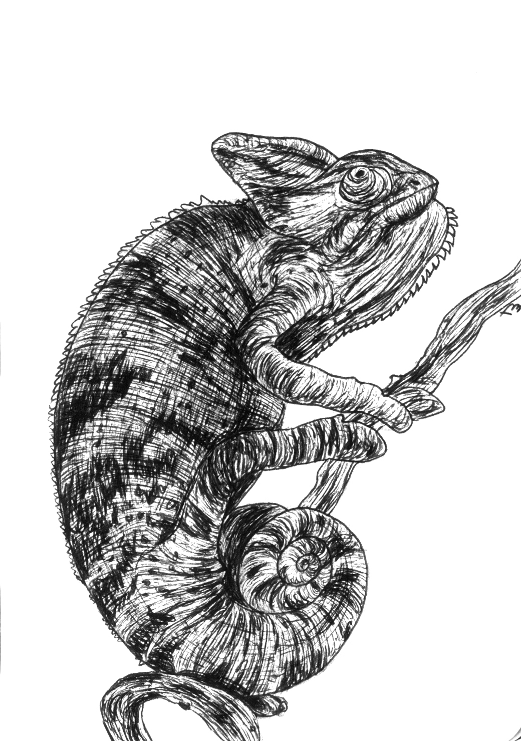 Chameleon – Moleskine 01