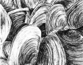 Shells  – Moleskine 01