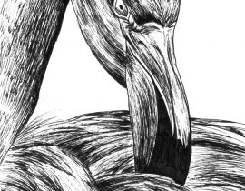 Flamingo – Moleskine 01