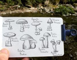 Spotted Mushrooms