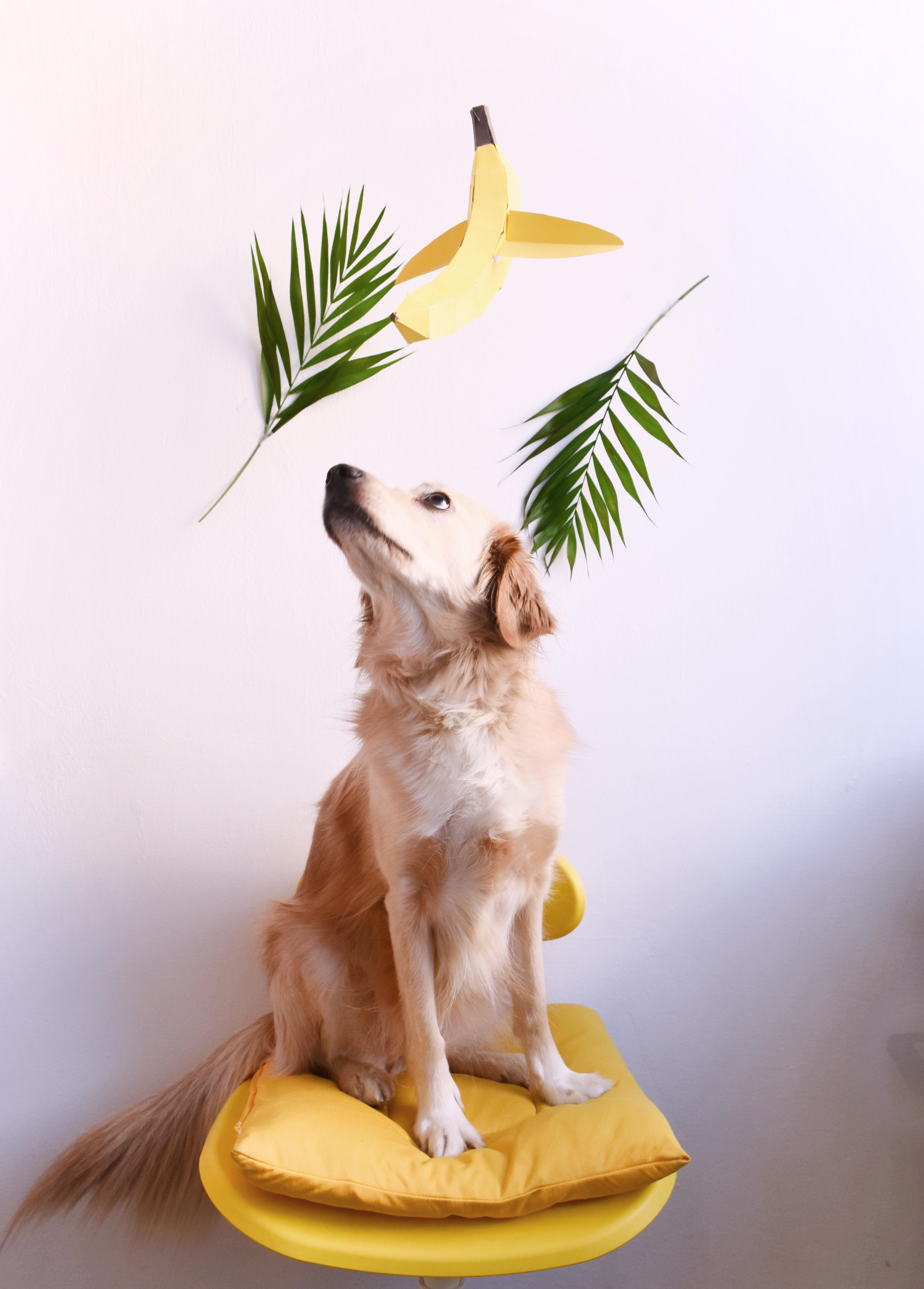 Is it a plane? Is it a banana? It's BANANAS :D