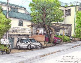 yasuda veterinary clinic color