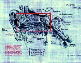 Inner ear study