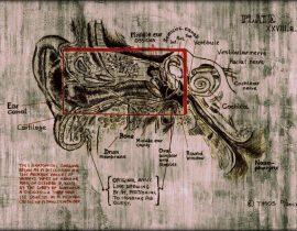 inner ear explorations