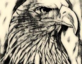 Bald Eagle, Blue Lake, Warwick, NY