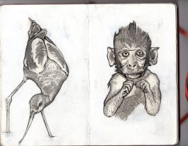 Monkey and Bird illustration