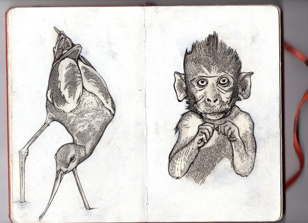 Monkey and Bird illustration