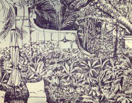 Bajan garden