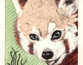 Red Panda ink drawing