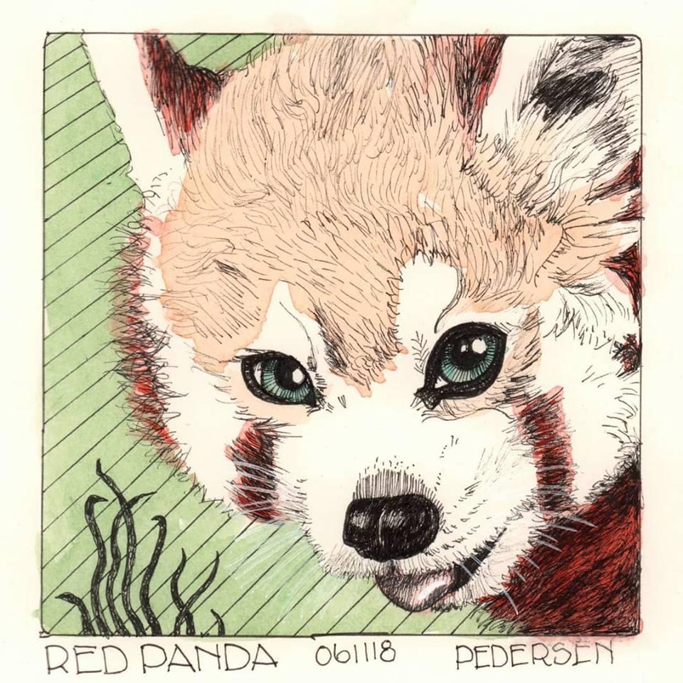 Red Panda ink drawing