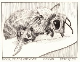 Honeybee Ink Drawing