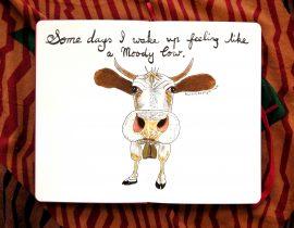Some days i wake up feeling like a moody cow