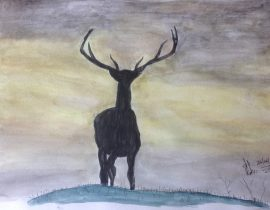 Stag in sunset, Scotland