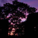 Parole, Pink and Orange Sky- New York