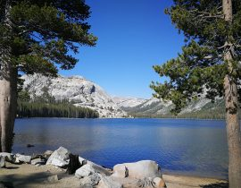 Stopping for a swim, Tenaya Lake, Yosemite