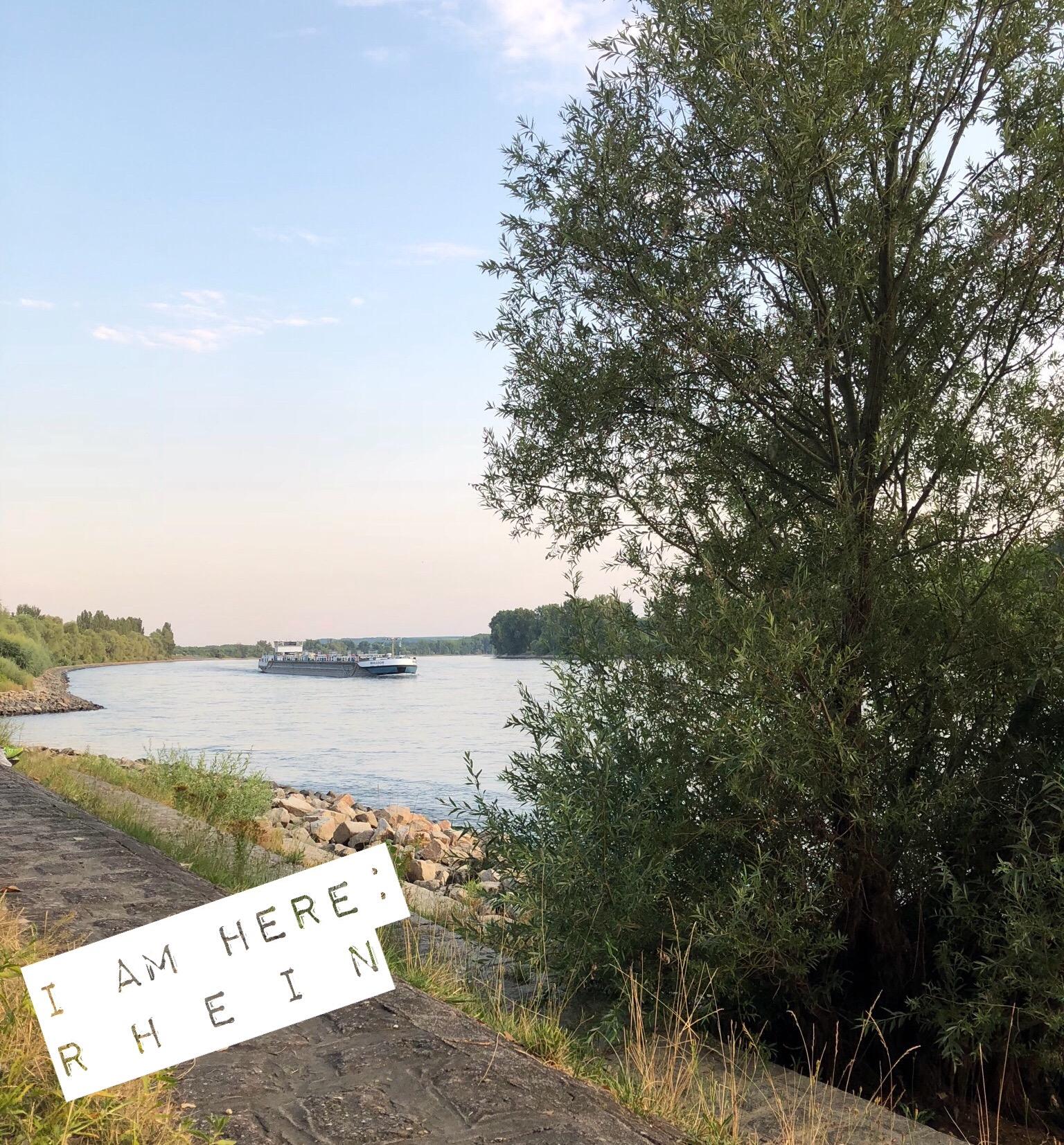 Rhein in Hessen (Deutschland)