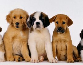 How You Can Care For Pet Dogs – Critical Points You Need To Know