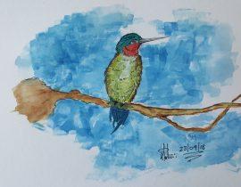 Read-Throat Hummingbird