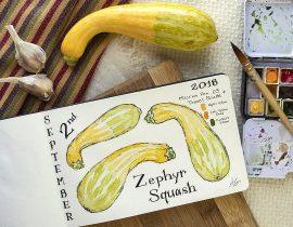 Zephyr Squash