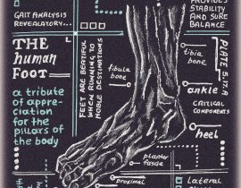 foot – anatomical