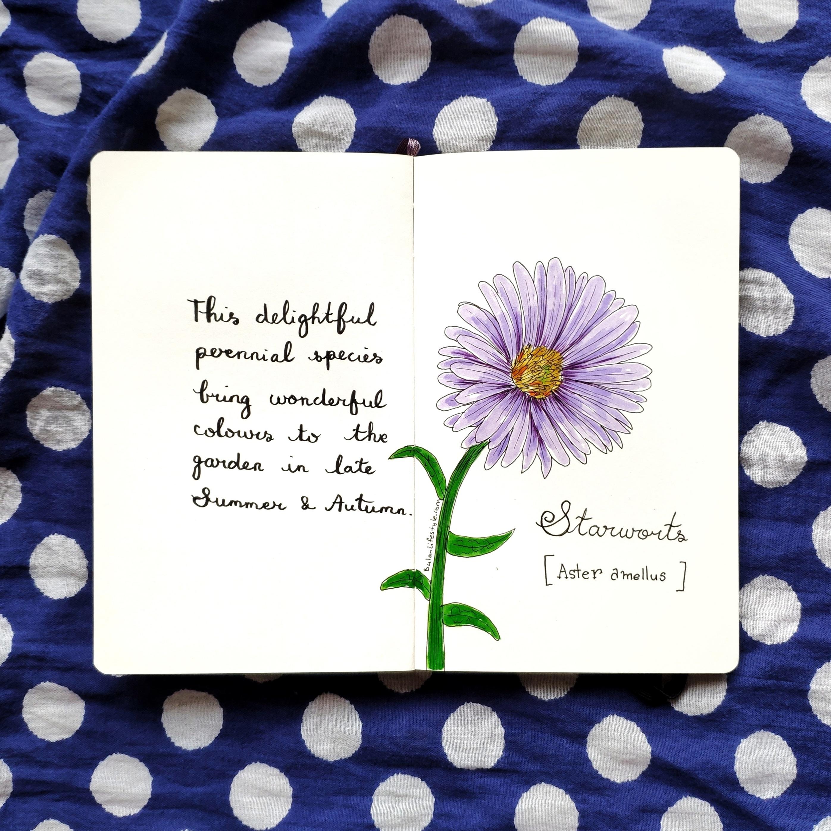 Starwort flower