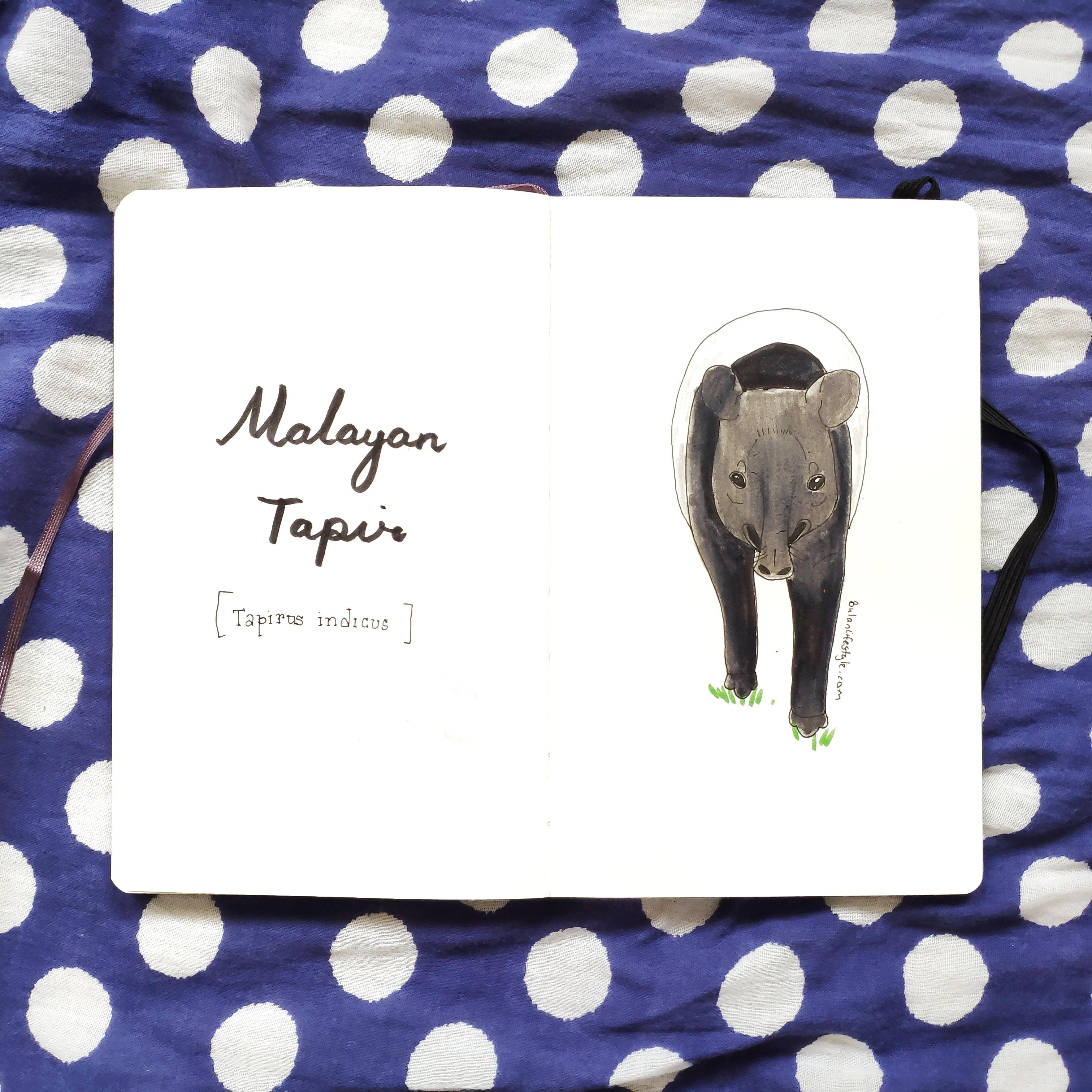 Mayalan Tapir