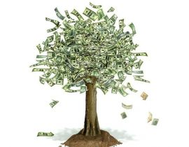 Money Trees Conceptual