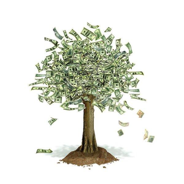 Money Trees Conceptual