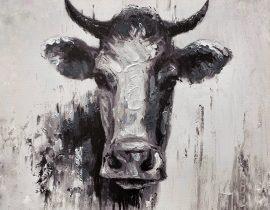 bovine stare