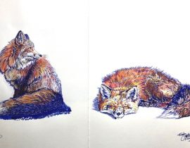 Being fascinated by ink blue with Watercolour pencil