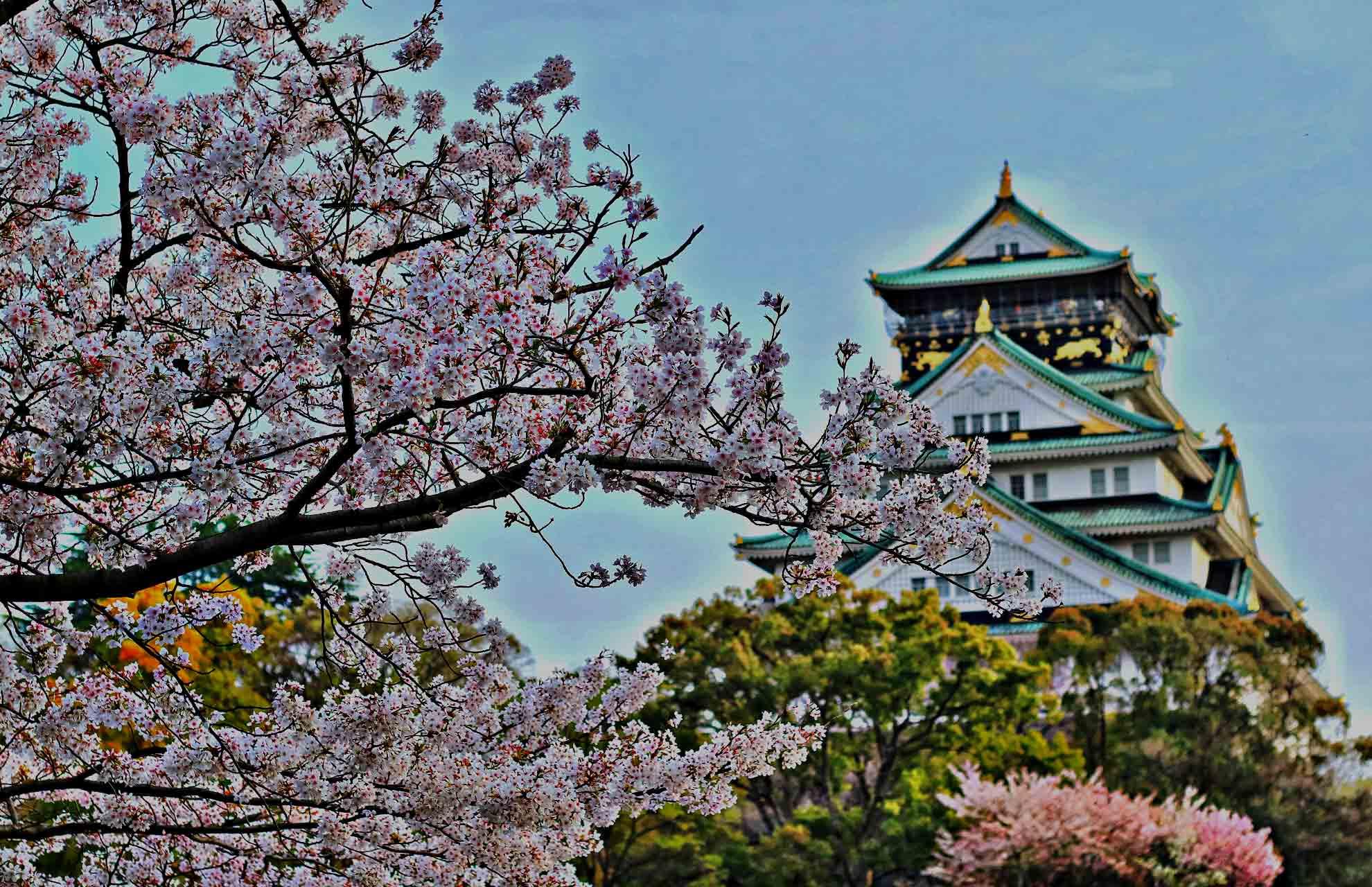 Apa Artinya Magang ke Jepang