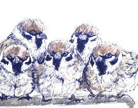 5 sparrows