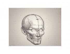 skull study, C
