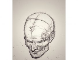 study of skull, B